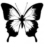 Sticker fluture WLAN11