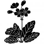Stickere pereti flori WLF527