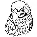 Sticker perete vultur WLAN31